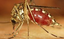 Plaga komarów w Polsce. Może interweniować wojsko