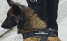 Psy pomogą w wykrywaniu koronawirusa