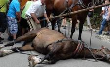 Konie nad Morskiem Okiem i proces fiakrów - znęcali się nad zwierzętami?