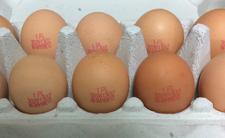 Jaja i salmonella - GIS ostrzega przed salmonellą!
