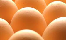 Salmonella na jajkach! GIS ostrzega, firma wycofuje produkt