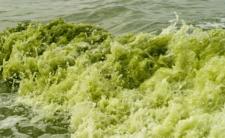 Zielona woda w Szczecinie -  z kranów leci barwnik czy trucizna?