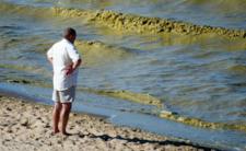 Zakaz kąpieli w Bałtyku. W morzu wystąpił zakwit sinic