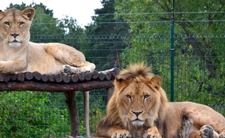 Zoo w Poznaniu - z dzieckiem do lwów. Będą pozwy sądowe?