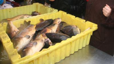 Żywe karpie znikają ze sklepów - koniec tradycji?