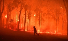 Apokalipsa w Australii. Ziemia płonie, kataklizm zabija ludzi i zwierzęta