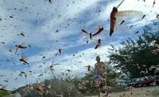 Biblijna plaga w czasie pandemii koronawirusa. Ludzie są w rozpaczy