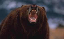 Bronił się przed niedźwiedziem. Odgryzł mu język