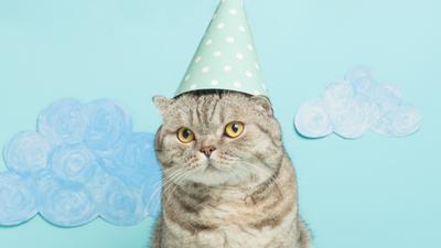 Kot bawił się na swojej imprezie urodzinowej