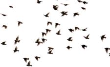 Deszcz martwych ptaków spadł w Rzymie