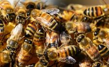 Atak pszczół we Francji i sceny jak z horroru