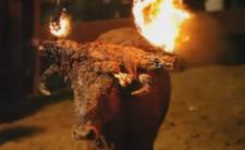 Hiszpański festiwal cierpienia - sadyści i psychopaci palą zwierzęta żywcem