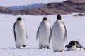 Niepokojące wieści z Antarktydy. Wojsko potwierdziło informacje