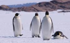 Koronawirus zaatakował Antarktydę