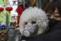 Chiny walczą z wirusem. Psy i koty czeka straszna śmierć