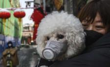 """Koronawirus budzi strach - Chińczycy oddają swoje psy i koty """"do utylizacji"""""""