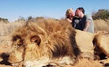Safari i polowanie - tyle kosztuje zabicie lwa lub słonia
