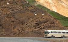 Makabryczny wypadek autobusu. Osunęło się zbocze, nie żyje 15 osób