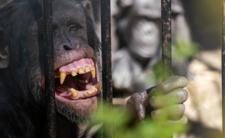 Małpia ospa atakuje w USA. Czy odzwierzęcy wirus stanowi globalne zagrożenie epidemiczne?