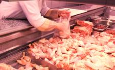 Drób skażony salmonellą