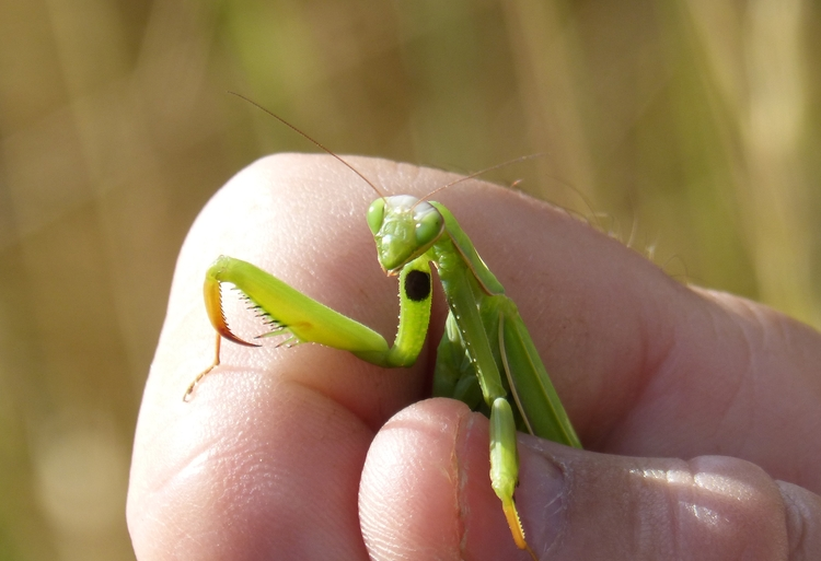 hand-leaf-flower-finger-green-insect-496400-pxhere.com