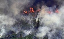 Płoną lasy Amazonii. Wszyscy się kłócą, zamiast reagować