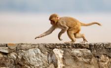 Wielki pościg i poszukiwania zbiegów. Z zoo uciekło 70 małp