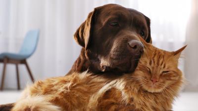 Psy i koty zostaną zaszczepione przeciw COVID-19?