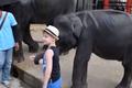 Zamęczyli słoniątko w zoo. Pękły mu nogi