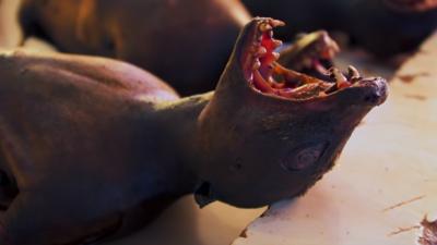 Chińska kuchnia i przepis na pandemię - znowu jedzą nietoperze