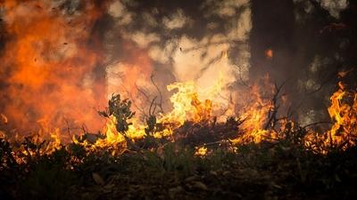 Strach na Ukrainie. Gigantyczny pożar w Czarnobylu
