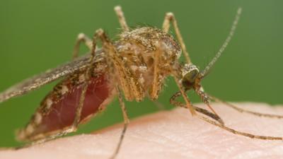 Komary roznoszą malarię po świecie. Ludzie umierają tysiącami