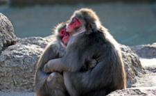 Zoo w Niemczech dotknął kryzys finansowy - koronawirus wymusi zabijanie zwierząt