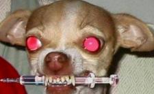 Złe psy - duchowni twierdzą, że religia uznaje je za przeklęte